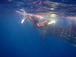 sharkwhale.jpg