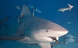 scuba total cancun (4).jpg