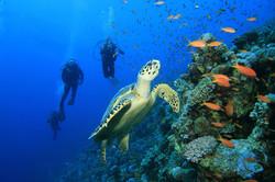 Scuba-Dive-Cozumel-Reefs.