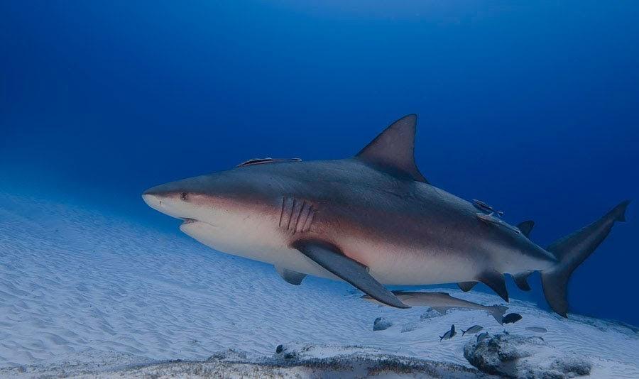 scuba total cancun (3).jpg