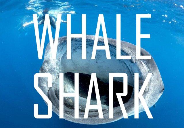 WHALESHARK,cancun scuba