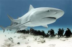 scuba total cancun (6).jpg