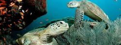 scuba cancun,diving in cancun