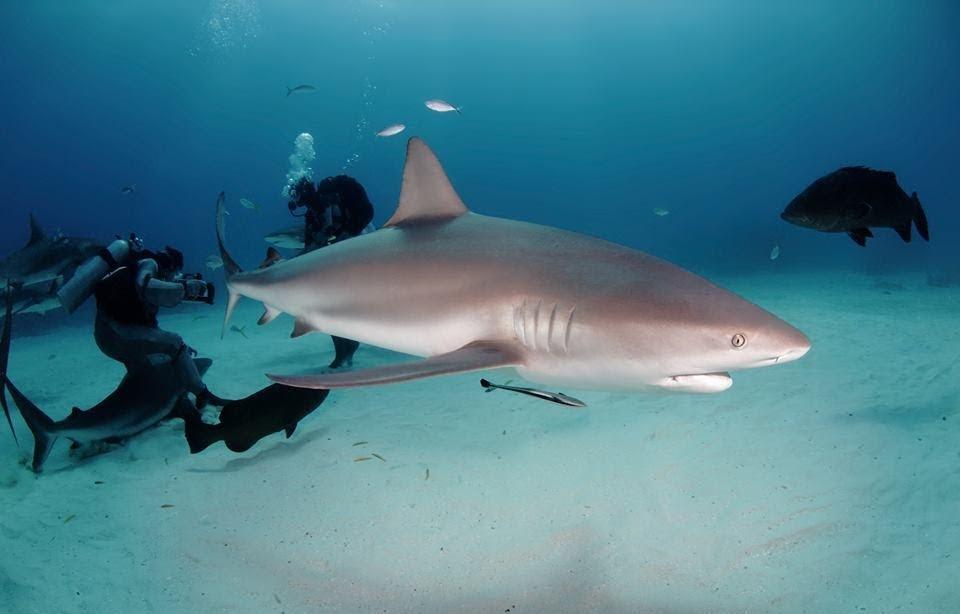 scuba total cancun (3)(1).jpg