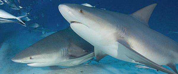 scuba cancun total (45).jpg