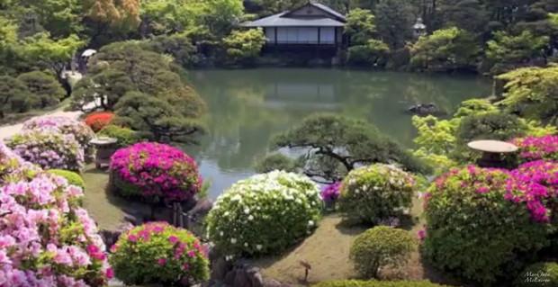 A passion for Koi gardens inspires me as a composer