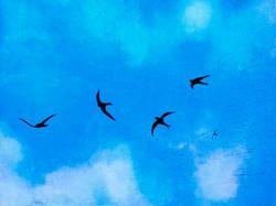 Swifts_II