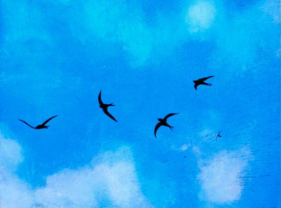 Swifts_II.jpg