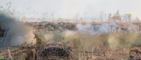Project of Rainforest and Peat Fires Center of Excellence Indonesia and Southeast Asia