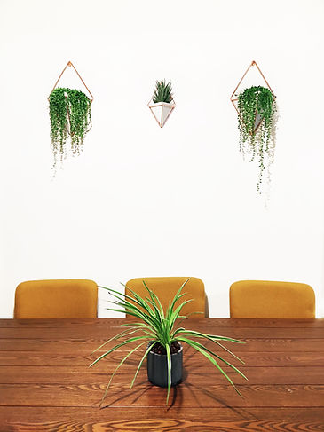 Terada Plants - Clients Home - Interior Plant Stylign Service - String of Pearls Wall Plan
