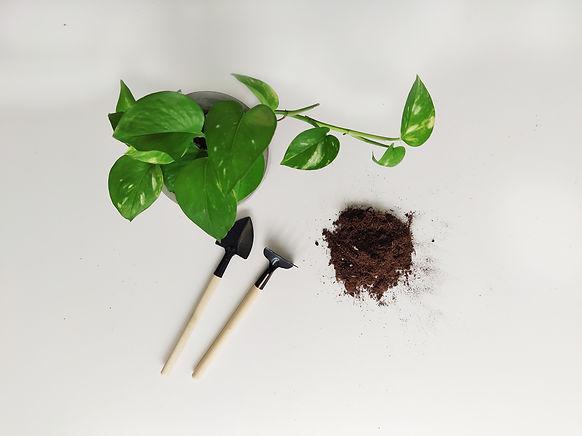 Terada Plants - Terada Therapy - Workshops & Seminar .jpg