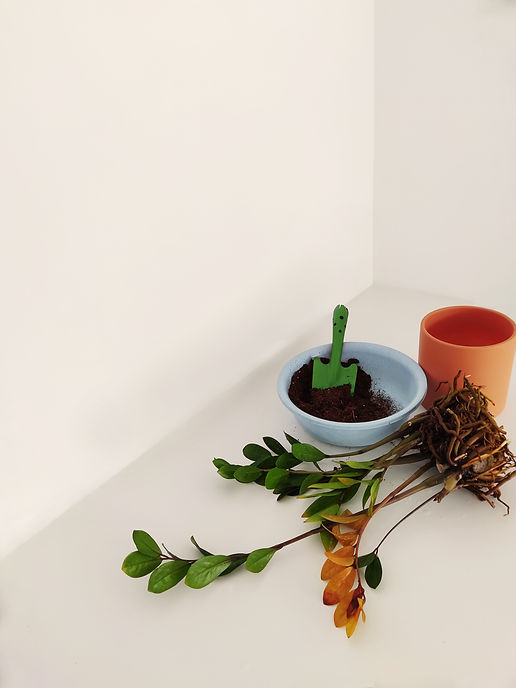Terada Plants Terada Therapy ZZ Plant Repotting Soil shovel.jpg