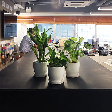 terada plants - space matrix.jpg