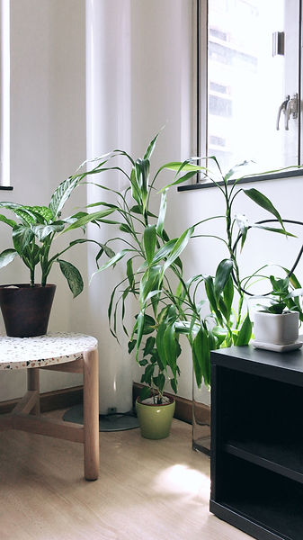 Terada Plants Interior Plant Styling Rep