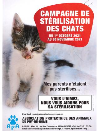 CAMPAGNE DE STERILISATION DES CHATS DU 1/10 AU 30/11