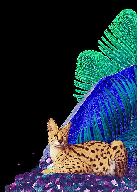 Lynx_Stones_2_edited.png