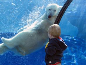 努力讓下一代看見北極熊!英國極地研究組織BAS 鼓勵孩子參與兩極環境議題