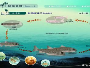 逛魚市學知識:中研院20個趣味臺灣魚類資料庫