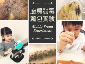 廚房發霉麵包實驗 - 兒童生物