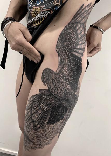 Hawk with Manuka Flowers 🌸