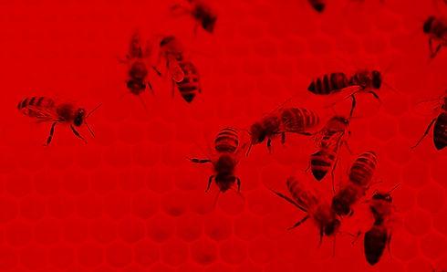 Bees at Work_edited.jpg