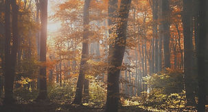 162764-forest-autumn-foliage-trees-leave