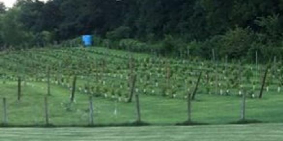 Castle Vineyards