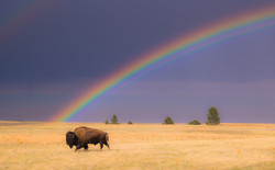 Searching For A Rainbow