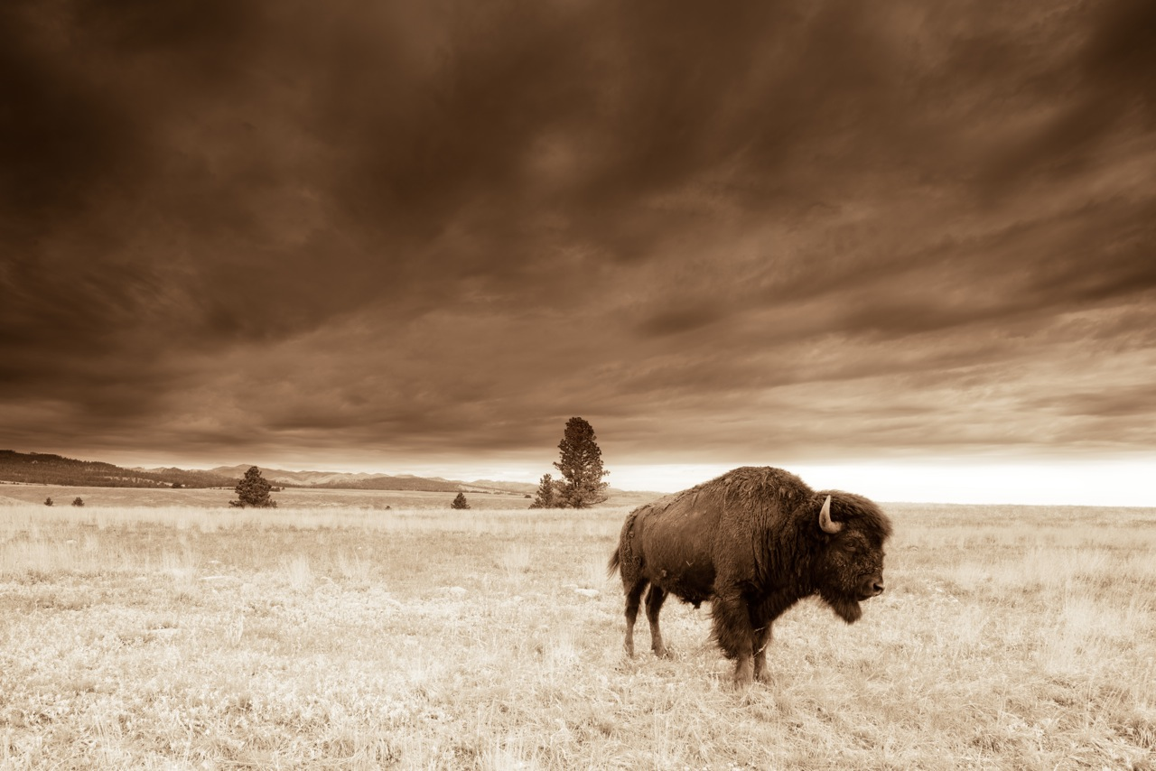 Talisman - Custer State Park