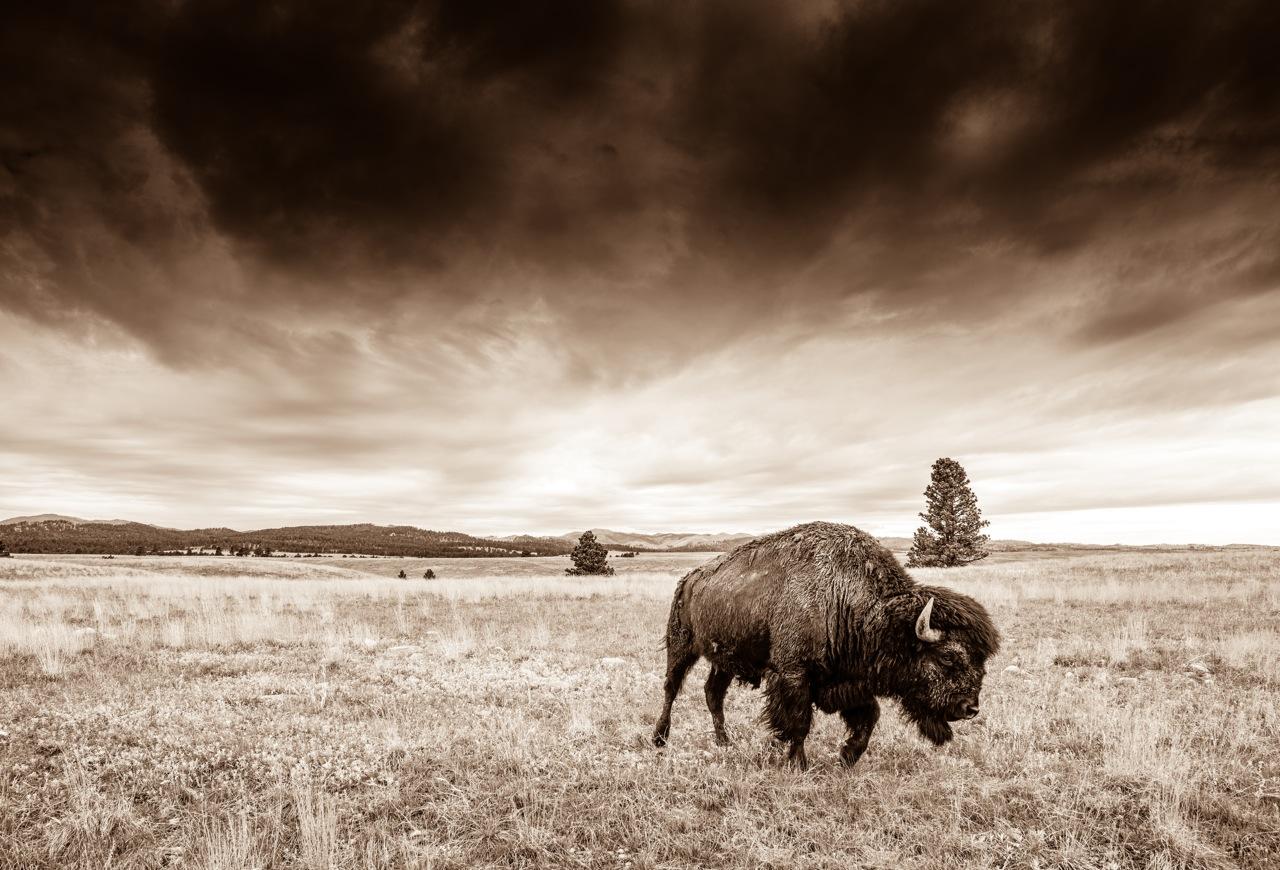 Rainmaker - Black Hills