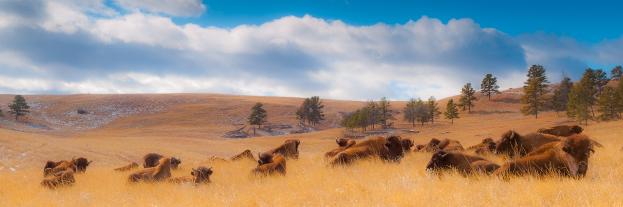 Chillin' In The Hills - Custer State Park, Black Hills