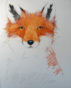 A Fox is a Fox