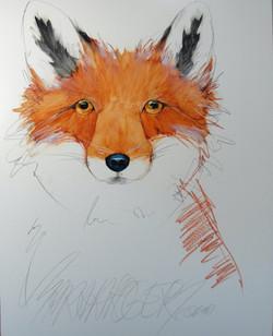 NEW!  A Fox is a Fox