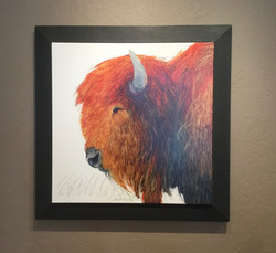 Custom bison frame