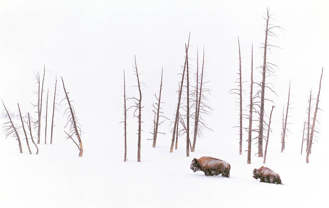 Winter Travelers