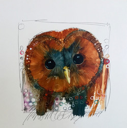 Spotted Owl #2