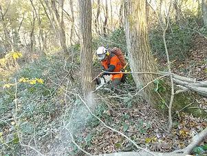 森林整備事業.jpg