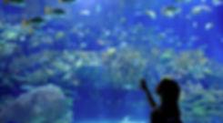 acquario.jpg