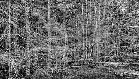trees-brackish.jpg