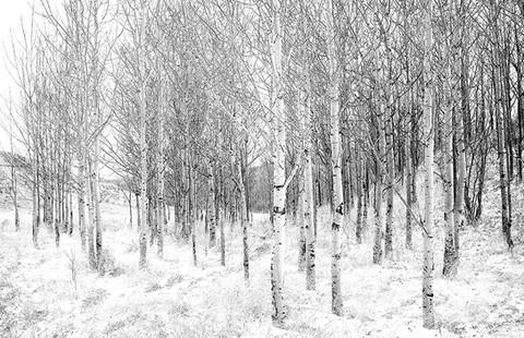 B&W-trees.jpg