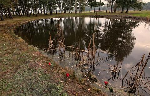 ash-pond.jpg