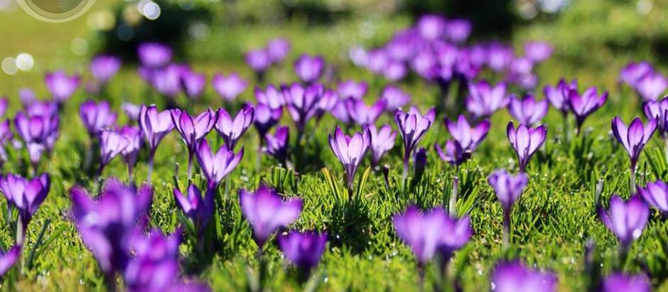 Spring Blossoms, by Robert G. Marshall, Studio 55's Photographer