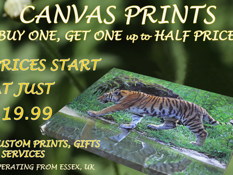 Large Canvases & Prints