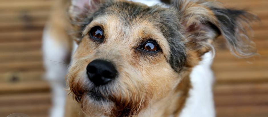 Pet Portrait Photo-shoots, on Location, by Studio 55 Photography