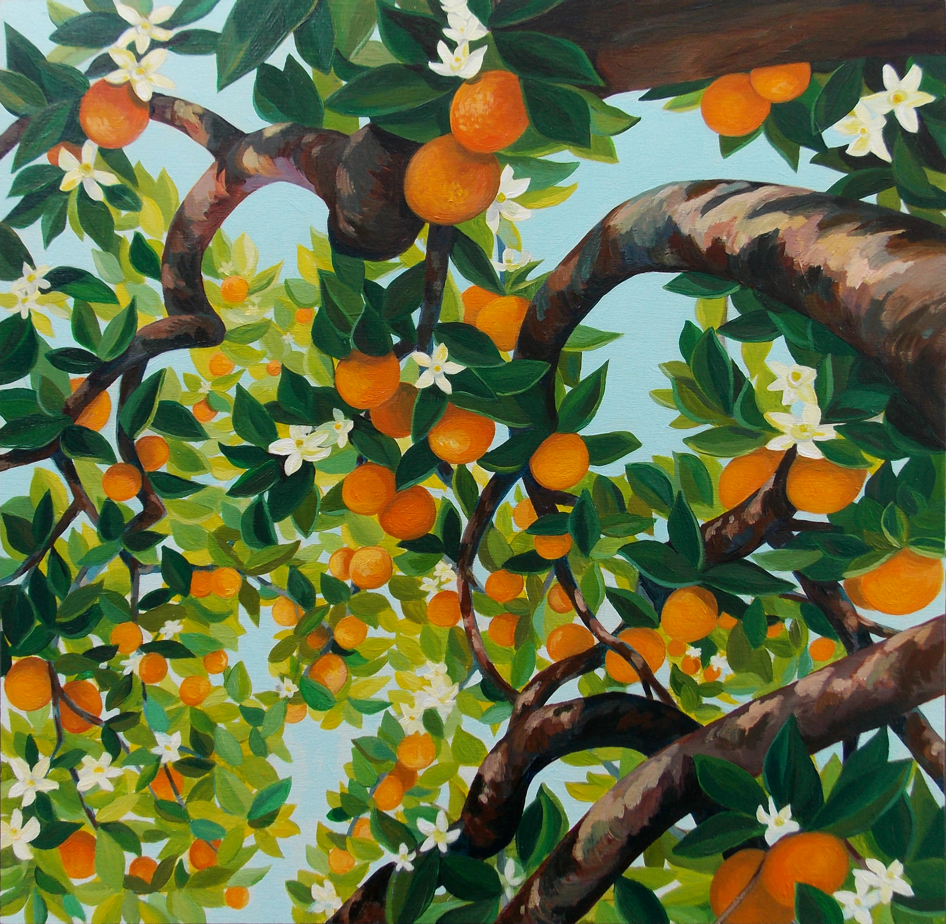 Abundance Canopy