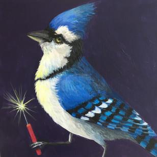Blue Jay Flare