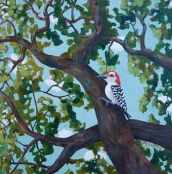 Woodpecker Canopy
