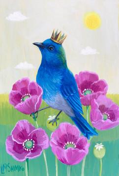 Bluebird Poppy