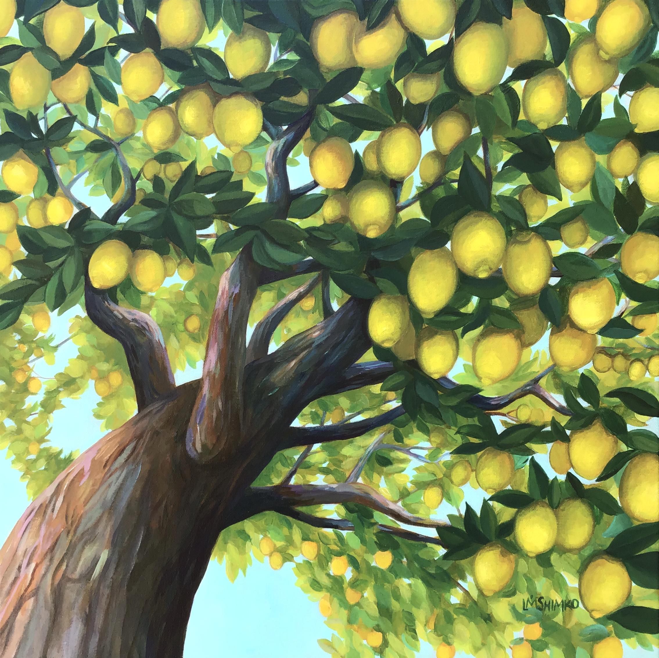Lemon Canopy