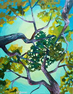 Canopy entwine